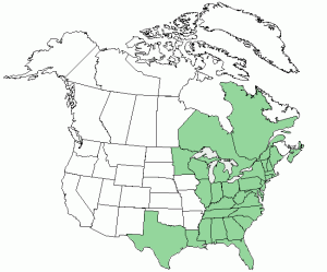 poison sumac distribution is primarily in eastern North America