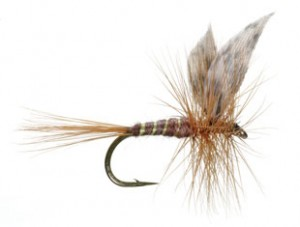 American March Brown is supposed to imitate a hatch insect